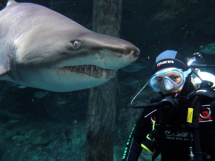Swim with sharks at Sea Life Sydney Aquarium