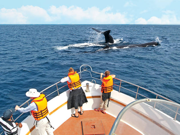 Whale watching excursions