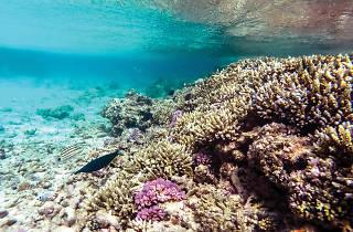 Fascinating corals