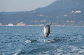 Caminhando com golfinhos