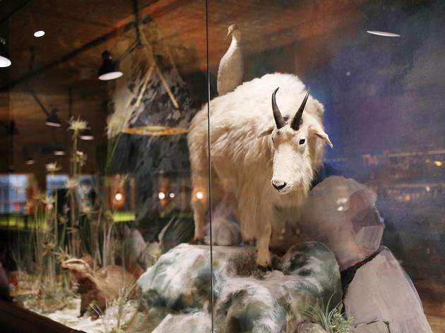 Inside at Natural History Bar and Grill
