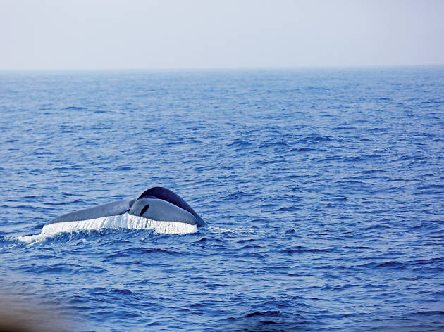 Embark on a whale watching adventure in Trincomalee.