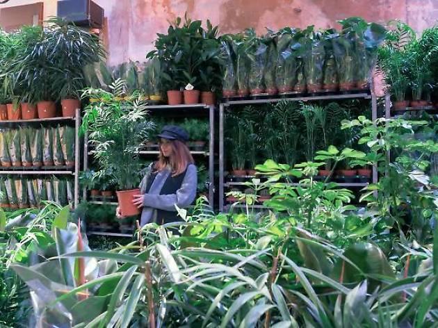 Ce week-end, vente de plantes au Palais de Tokyo à partir de 2 €