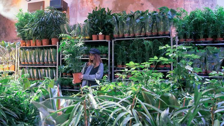 Grandes Ventes de Plantes et Sapins BIO Paris