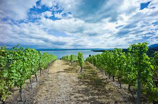 Neuchâtel wine region