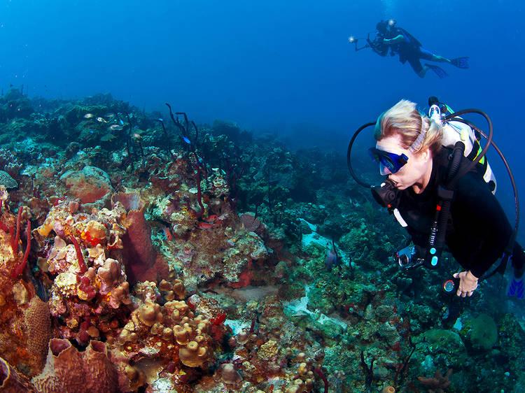 Admire the underwater beauty