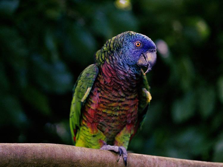 Des Cartiers Rainforest Trail