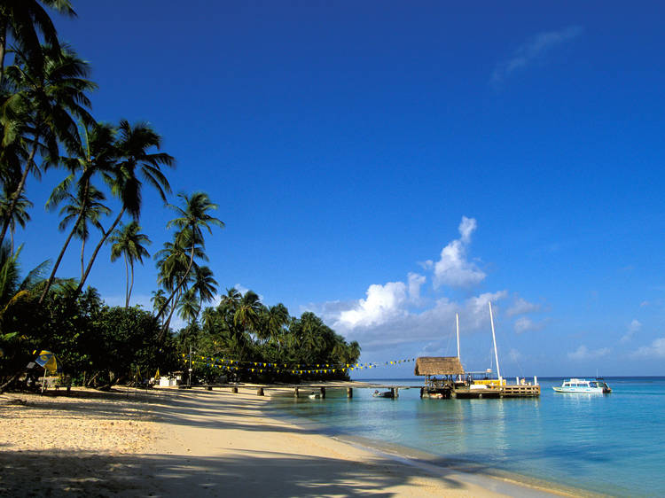 Be a beach bum at Pigeon Point