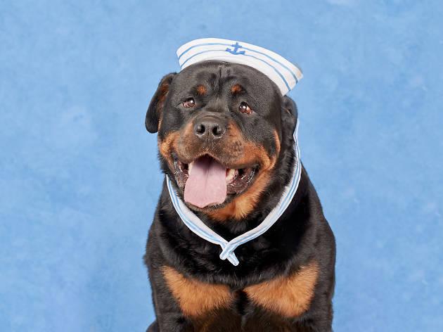 Dog Photog's sailor pop-up