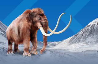 Australian museum mammoth