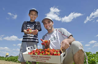 The Strawberry Festival at Linvilla Orchards features the world's largest strawberry shortcake.