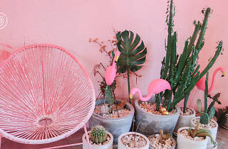 Pinkplanter Cafe