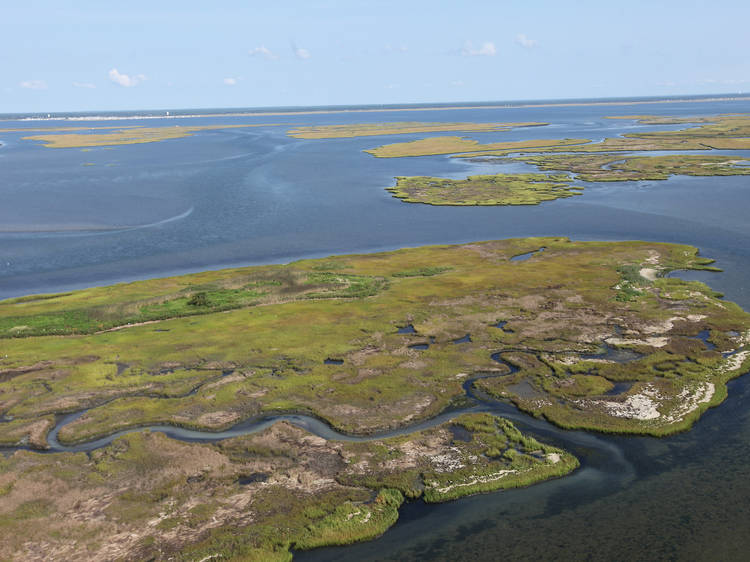 New Jersey: Explore the marshes of the Edwin B. Forsythe National Wildlife Refuge