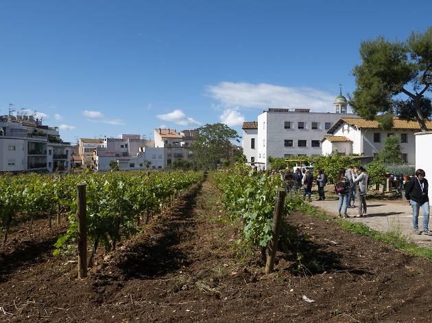 Una excursión para saborear la Carretera del Vino