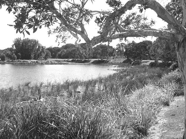 Sydney myths, Centennial park eels