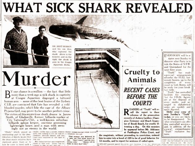 Sydney myths, Shark arm case