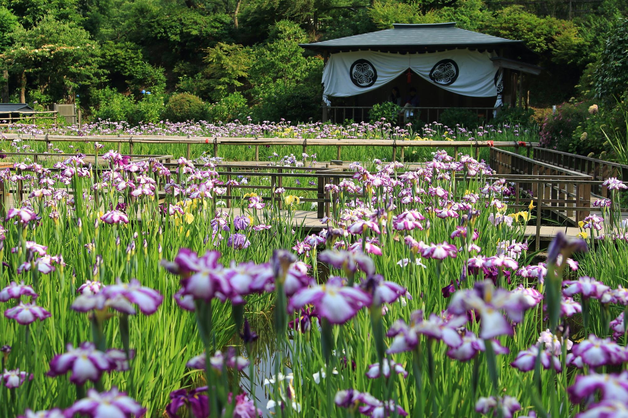 東京を創訳する 第23回『初夏』