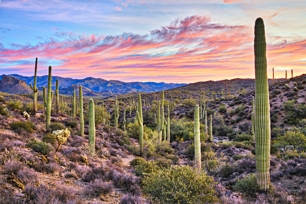 The 20 best things to do in Arizona