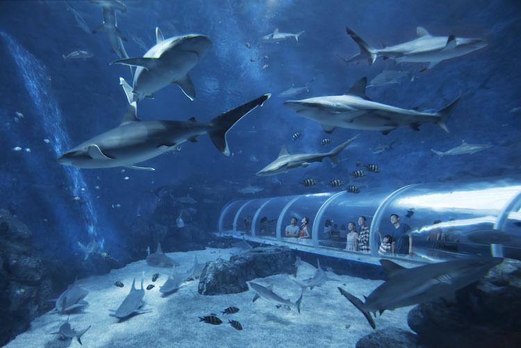 SEA Aquarium Resorts World Singapore