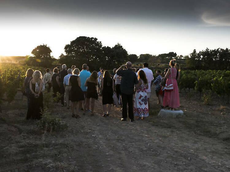 Un passeig per les vinyes