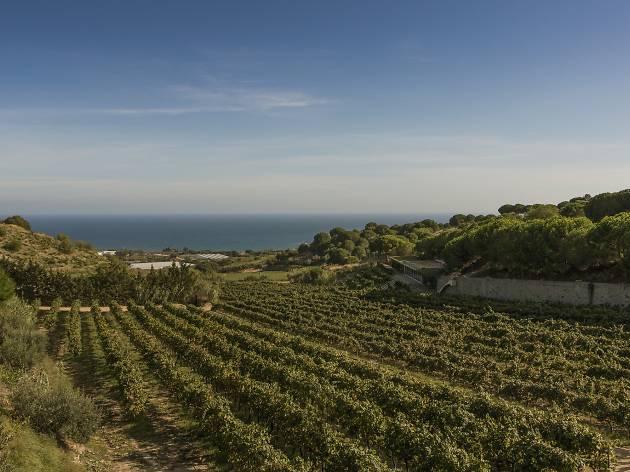 Vinyes Alta Alella