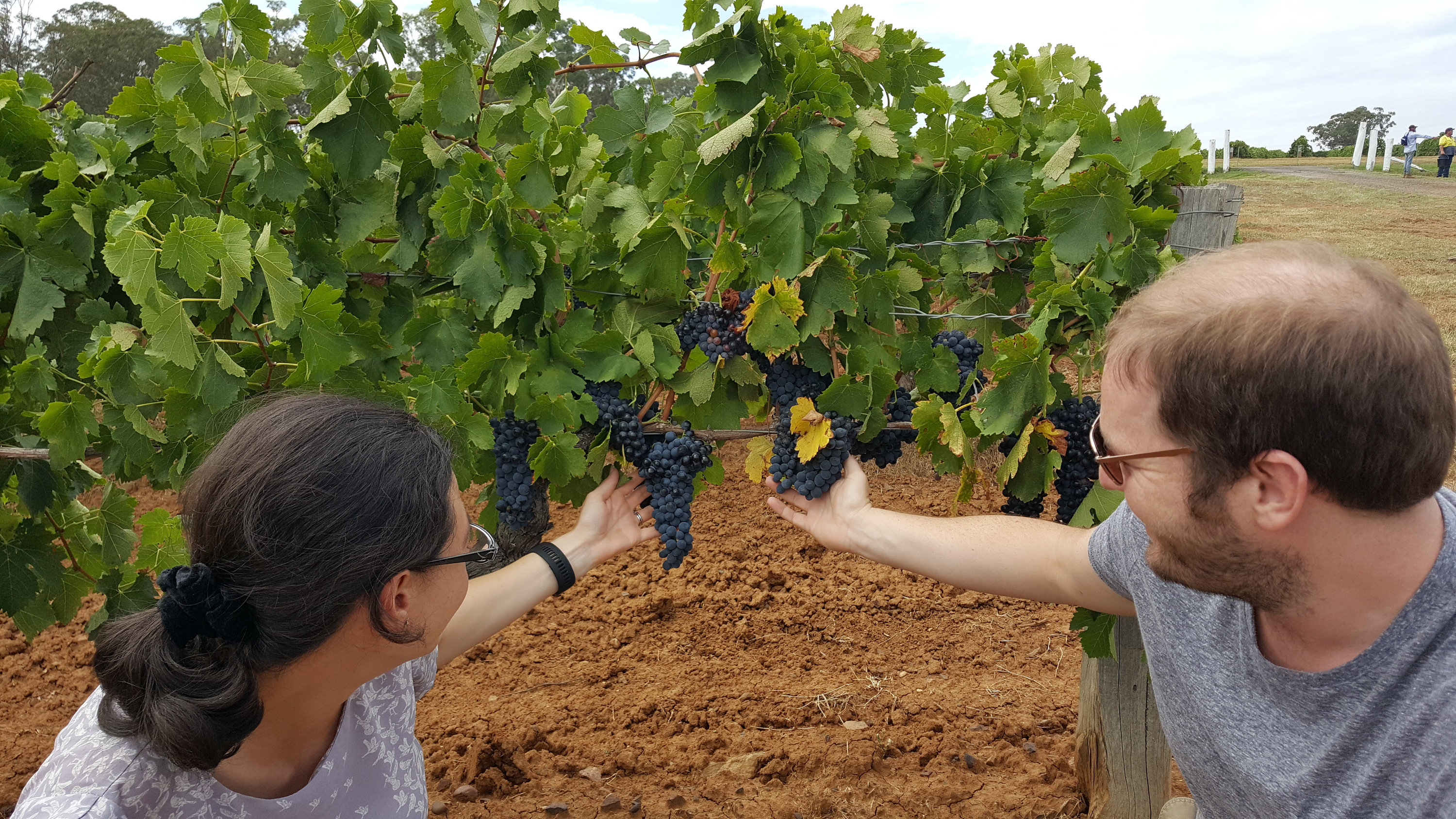 Couple looks at grapes on a vine.