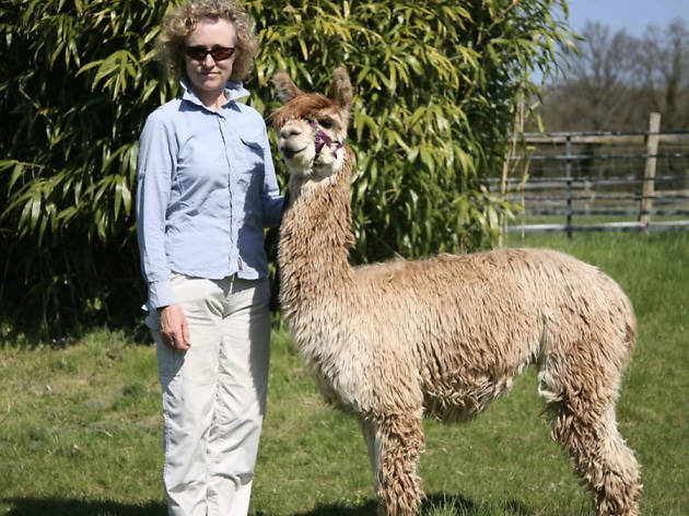 Best TTD Isle of Wight West Wight Alpacas