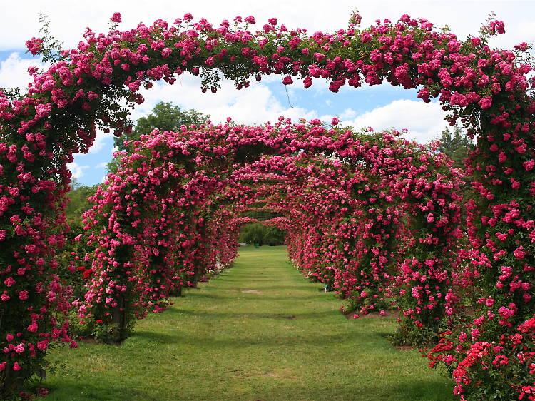 Connecticut: Instagram your way through the Elizabeth Park Rose Garden