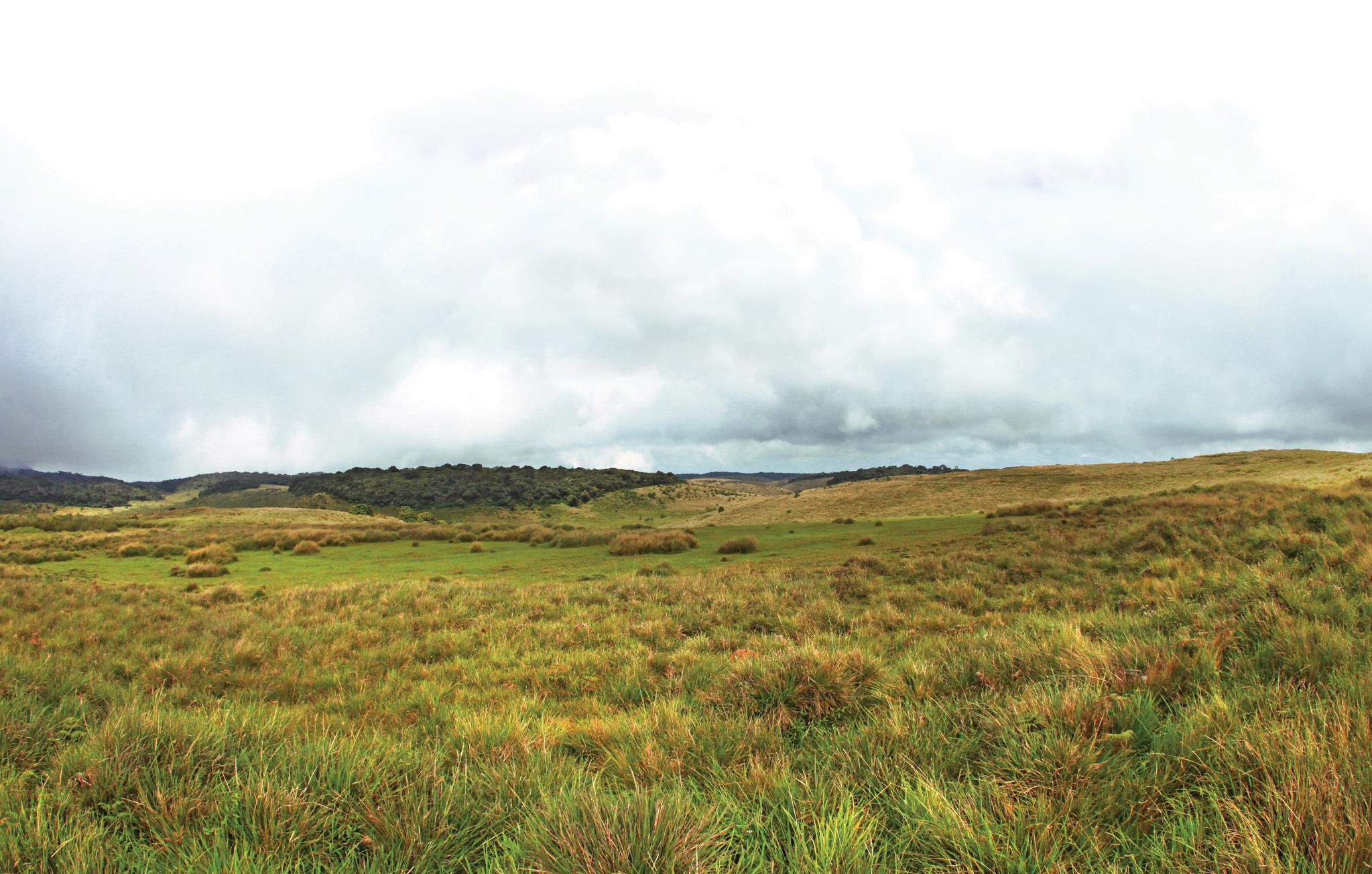 Horton Plains, the island's highest tableland