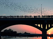 Bats on bridge