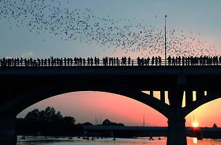 Bats on bridge