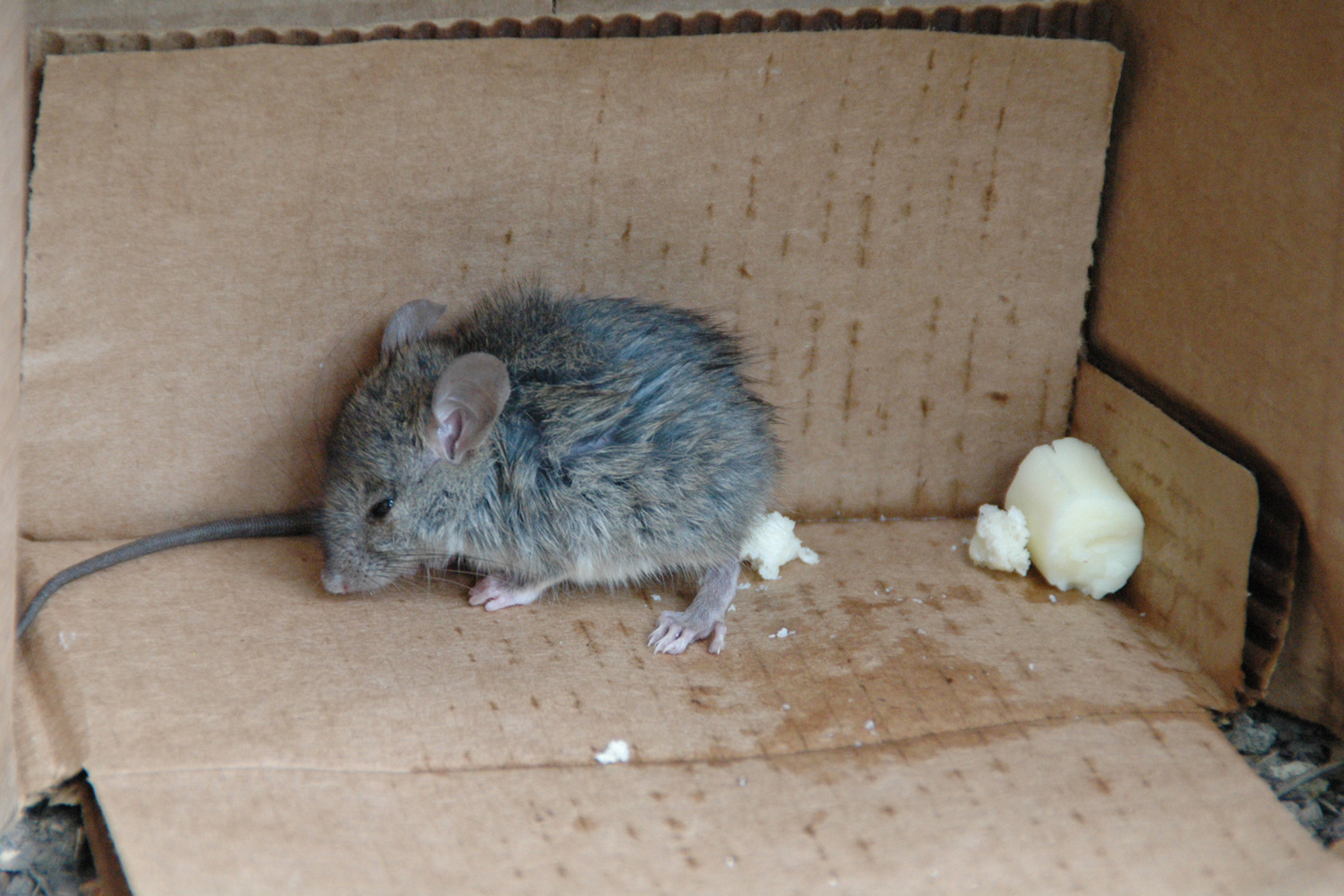 What the hell are we supposed to do with mice in our apartments?
