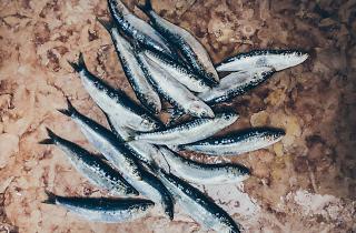 Comida, Peixe, Sardinhas