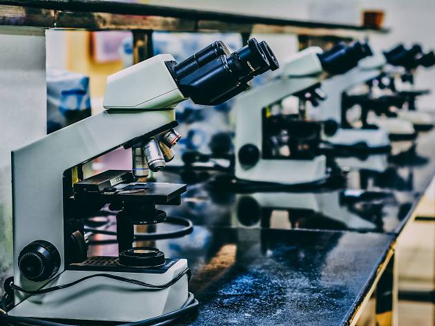 Investigadores do Porto estudam proteína que pode tratar Alzheimer