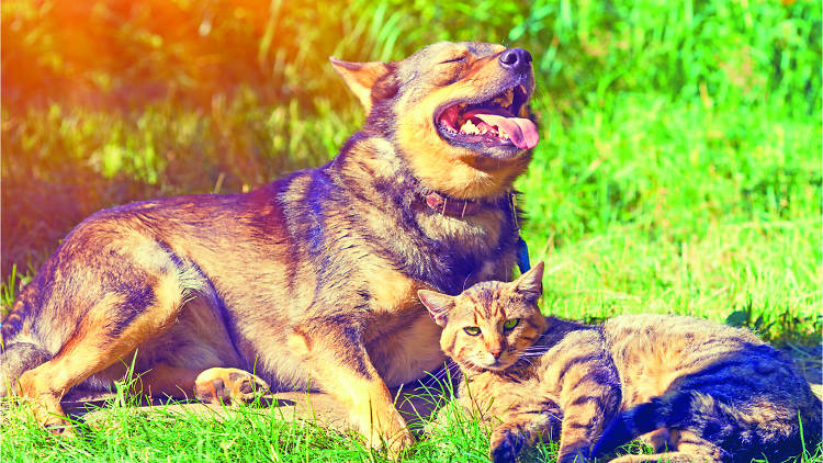 Calor en perros y gatos