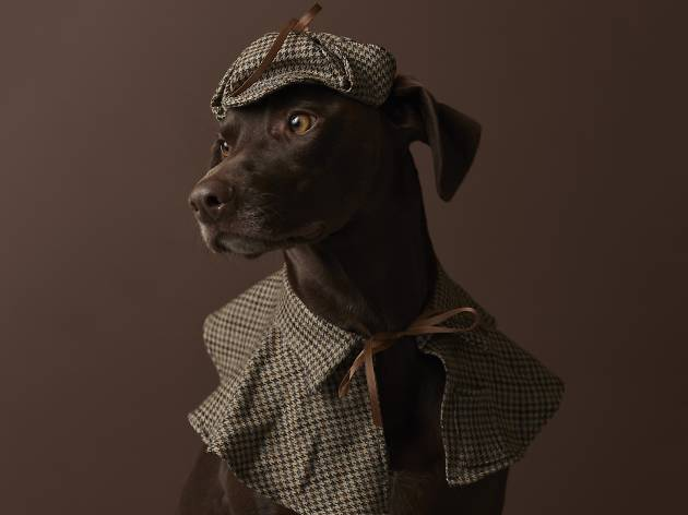 Dog Photog Pop-up: Sherlock Bones