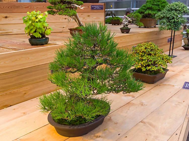 Jardineria japonesa