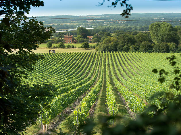 Chapel Down winery, boozy day trips near London