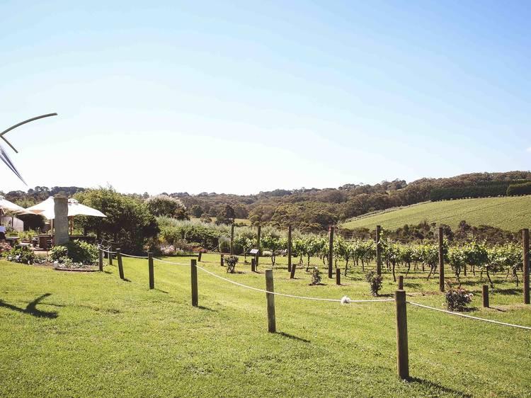 Mornington's fancy-pants winery: Montalto