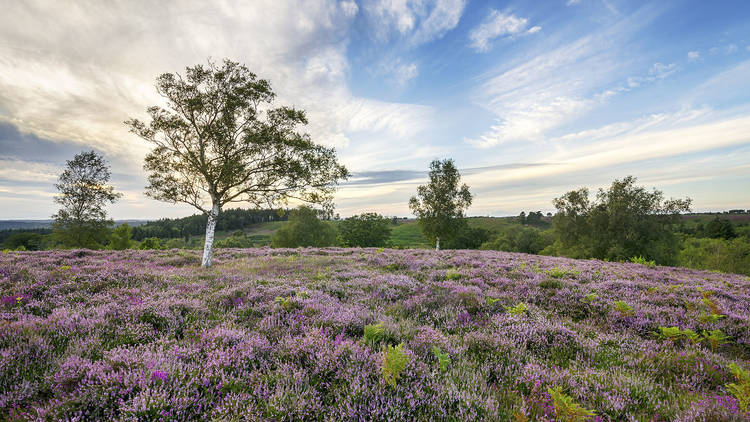 The ultimate guide to Hampshire