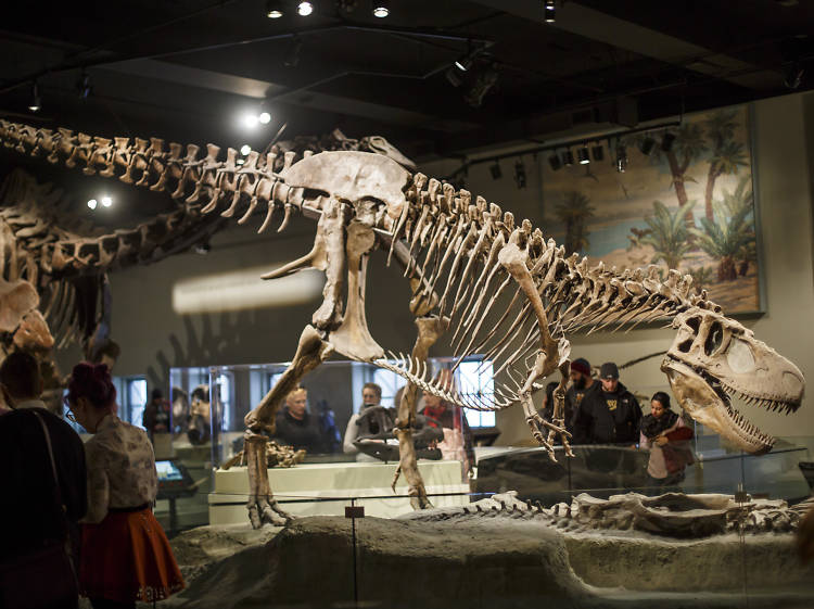 Chicago's 12 best museums