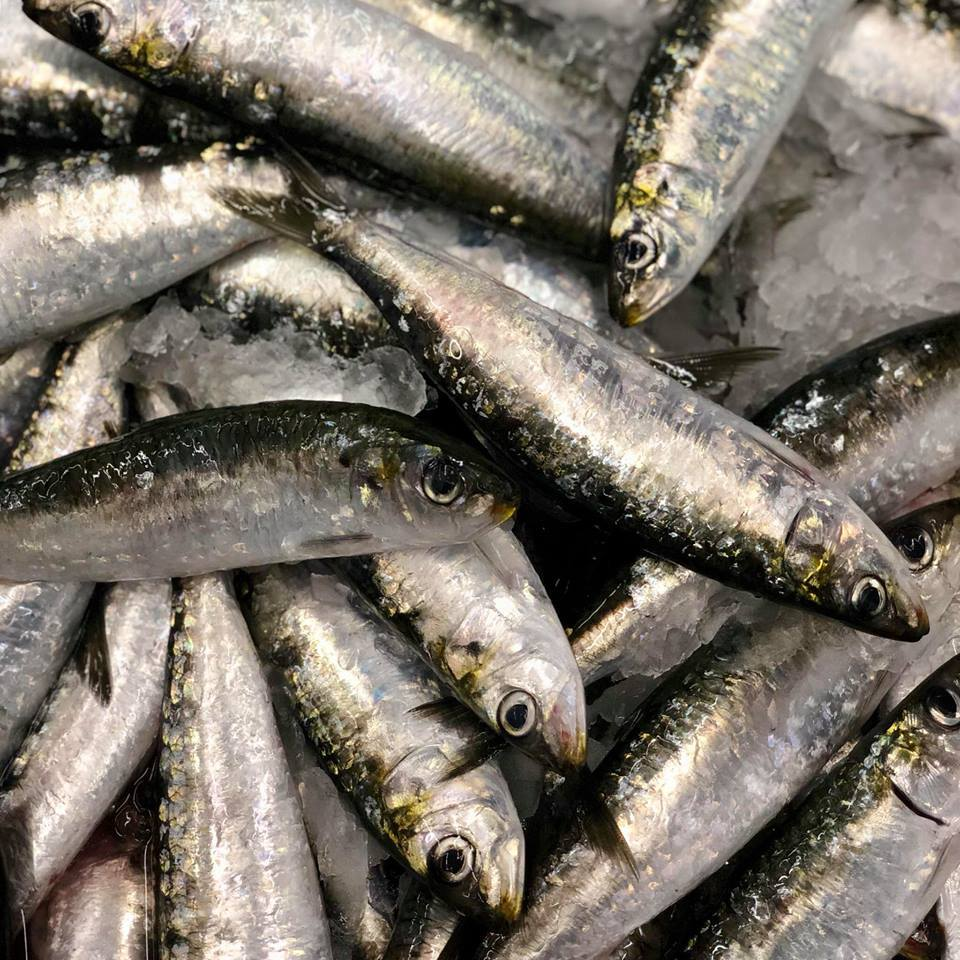 Faça-se à estrada e vá até Matosinhos comprar as suas sardinhas