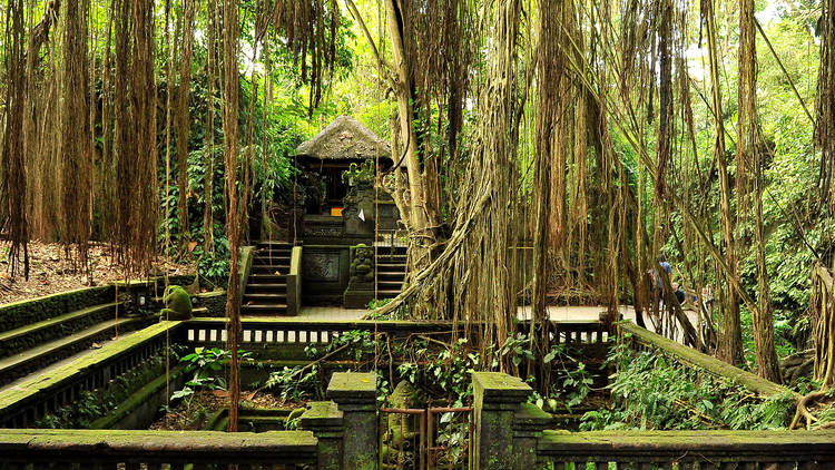 The ultimate guide to Ubud