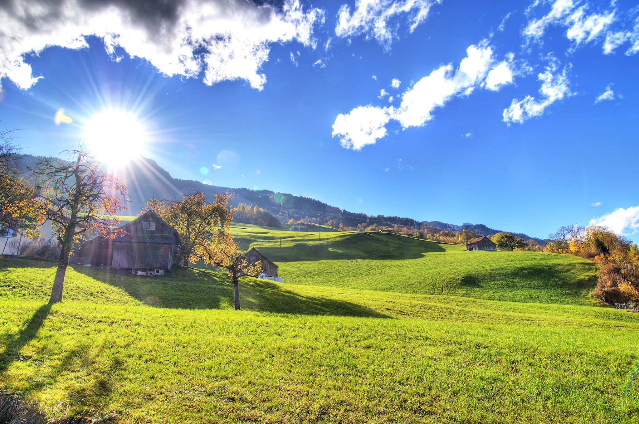 Switzerland meadow photo, for Swiss staycation campaign