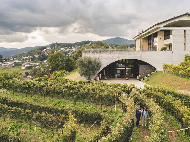 Découvrir la production vinicole du canton de Lugano à la Ferme Moncucchetto