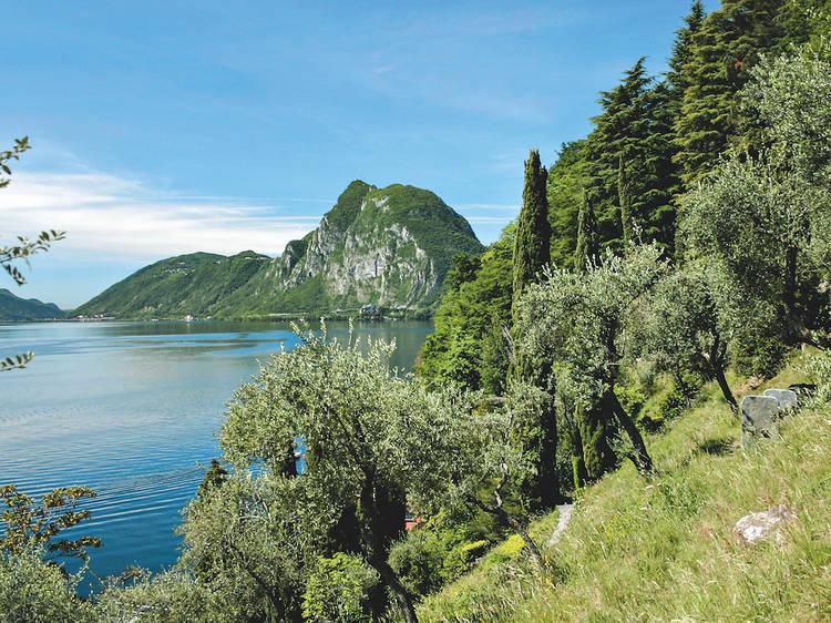 Partir en randonnée sur le sentier panoramique de l'olivier