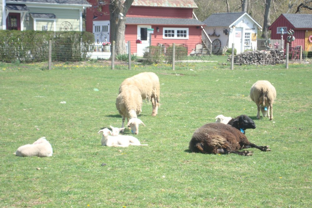 Catapano Farms