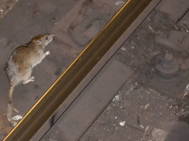 This subway rat getting kicked in the face is a perfect metaphor for life in NYC