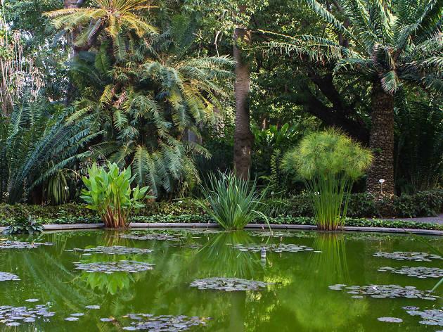 Jardin Botanico, Tenerife
