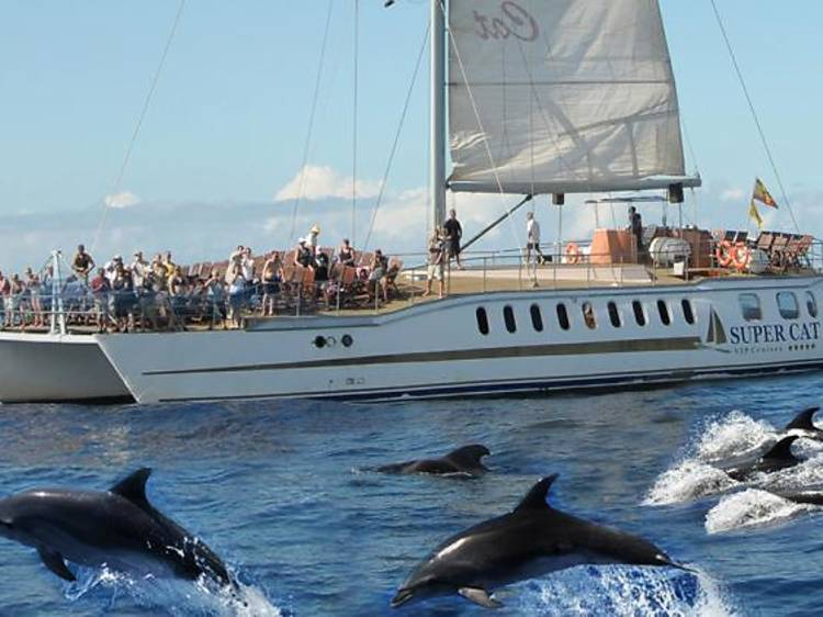 Albirar dofins a Gran Canària